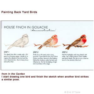 Erin O'Toole shows how to draw the birds in your own backyard.