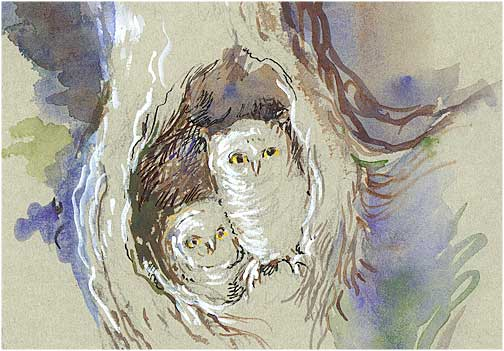 two-owls-542