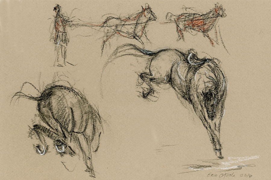 Horse drawing by Erin O'Toole.